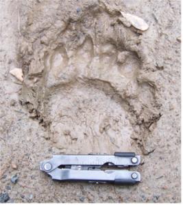 paw_print_in_mud