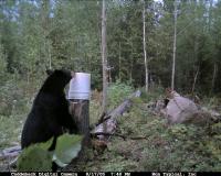 standing_bear_at_bait